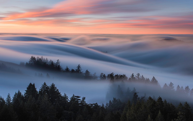 Awake in a Dream, Mt.Tamalpais State Park, CA