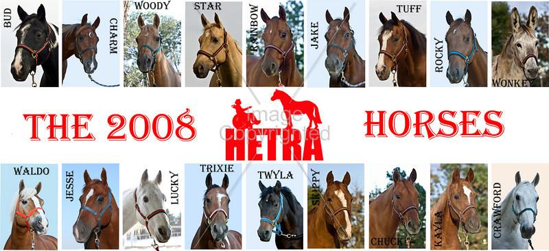 2008 Hetra Horses