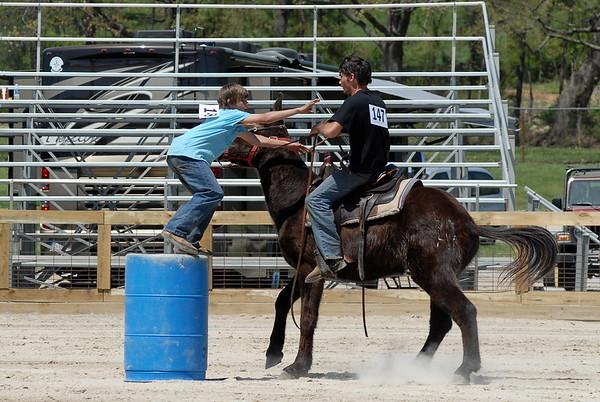 2010 Mule Day Riding Mule