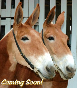 Mary & Martha - Coming Soon