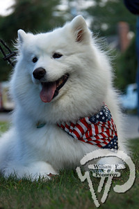 Krystal,  samoyed, Brewster...PHOTO GALLERY:  Cape Cod Pet Gazette Fall 2010photo(s) 22 of 44 WickedLocal.com/CapeCod October 21, 2010COMMUNITY NEWSPAPER COMPANY