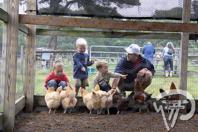 Farm animals, activities in Yarmouthport