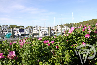 SUMMER SCENE Summertime awaits  at Saquatucket Harbor.  Harwich Oracle June 19, 2013 front page