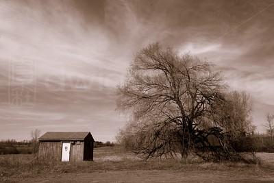 Tree in Sepia / The Adirondacks Collection / 2009 Autumn