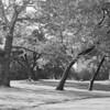 Park Brooklyn