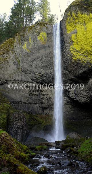 AKC_2461