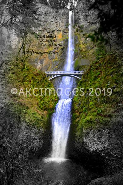 AKC_2564
