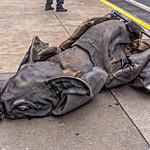 Collapsed Elephant
