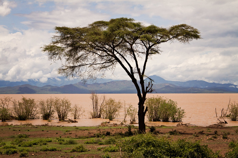 Lake Chamo (the Pink Lake) of Ethiopia