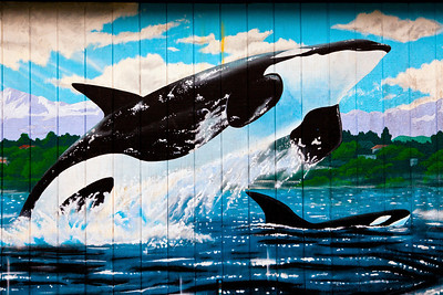 Orca Car Wash Forks WA_8355