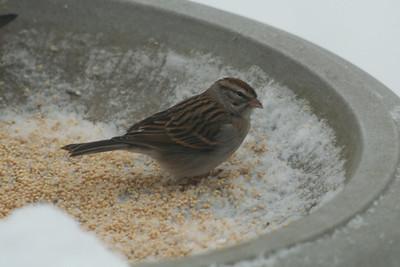 Bird Pix for SNW Blog