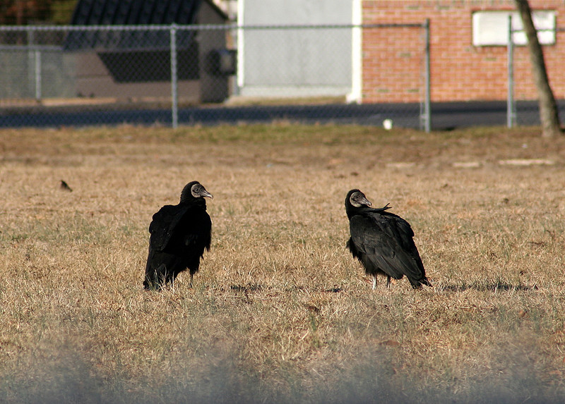 After copulation, they remained on the ground for several minutes ...I have others photos not loaded here.