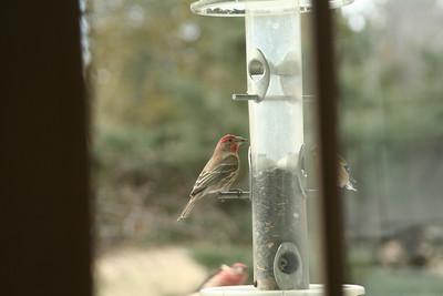 Ornithology Interim Exam 2-27-09