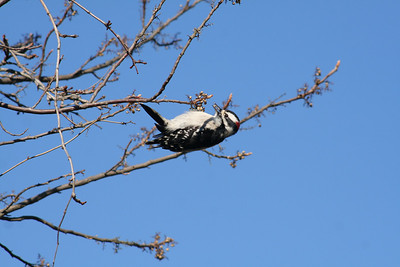Ornithology Mid-term 031309
