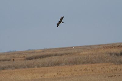 Pix for Field Trips Jan-Feb 2009