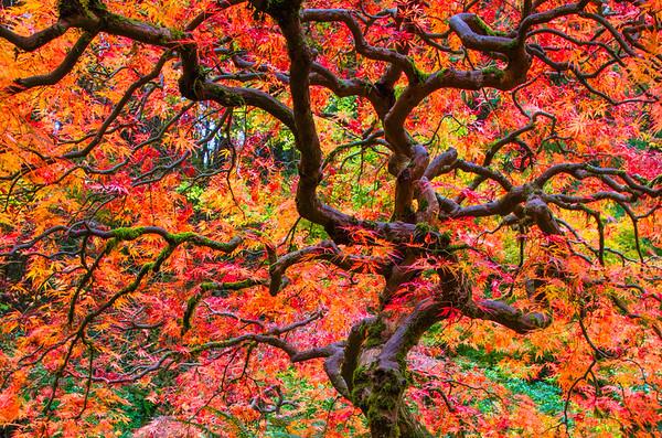 Peace-Pix Red/Orange