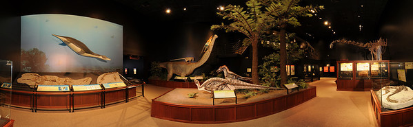Hall of Giant Dinosaurs Panoramic Image - Museum of the Rockies, Bozeman Montana showcases one of the largest collections of dinosaur fossils in the world. Photography by Jim R. Harris
