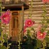 Tinsley House Garden - Photography by Jim R Harris