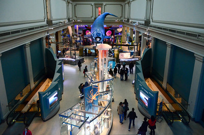 The Sant Ocean Hall at the  National Museum of Natural History Washington DC January 2014.