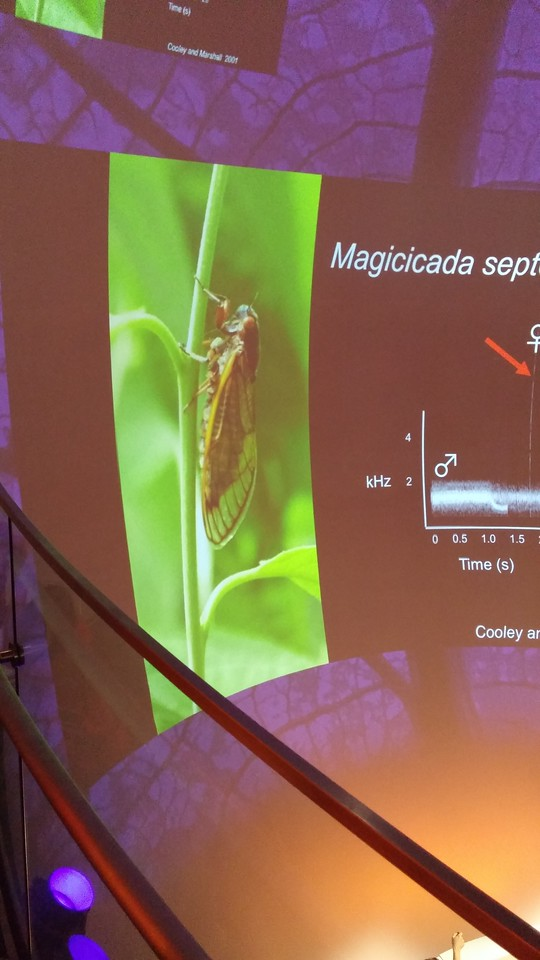 Presentation in the museum theater wall about cicadas.