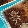 And another tarantula!