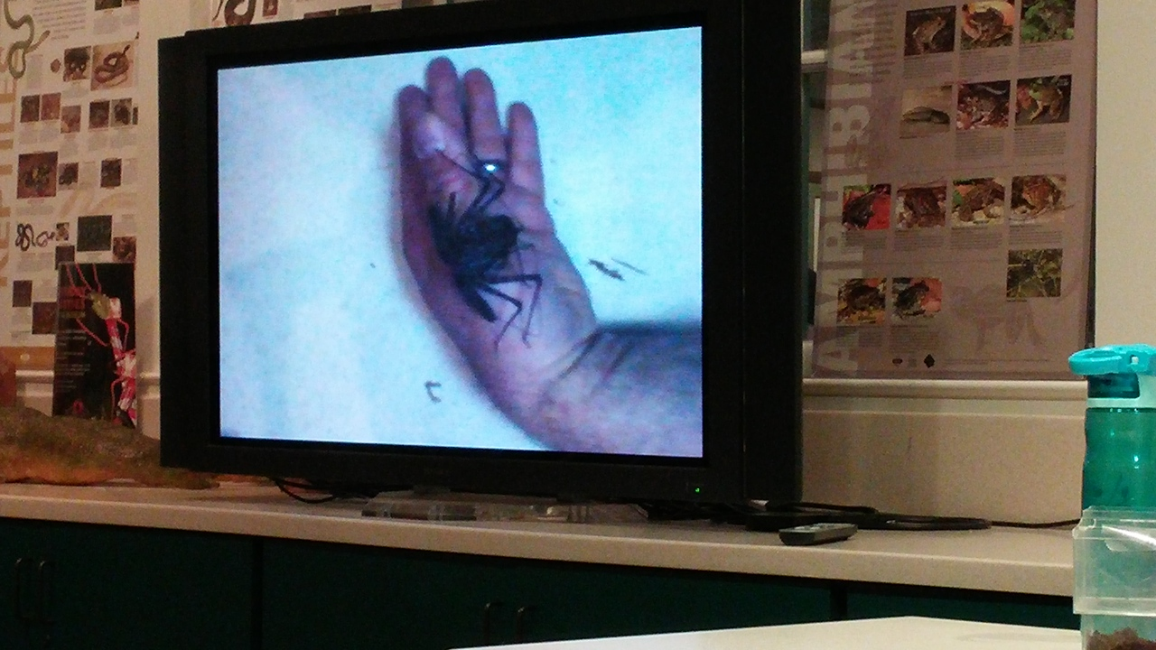 """Attended a Bugfest museum lecture: """"Confessions of a Bug Wrangler""""."""