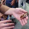Big roach!