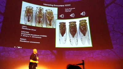 Video of lecture on cicadas with sounds of different species.