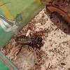 Big ugly bug.
