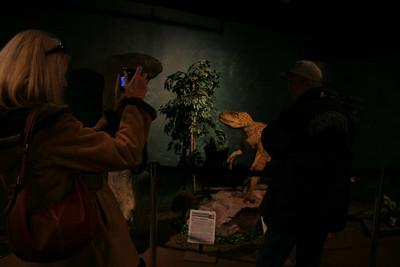 The (now defunct) Dinosaur Walk in Riverhead, NY.