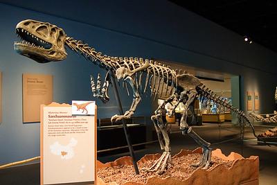 Szechuanosaurus (97040788)