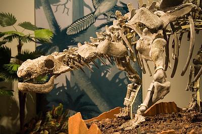 Crichtonsaurus (named after Michael Crichton, author of Jurassic Park)