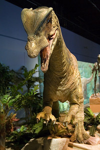 Two Crested Dilophosaurus (97040785)