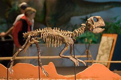Psittacosaurus (96996770)