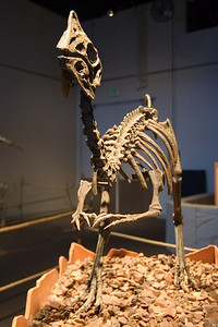 Oviraptor (96996776)