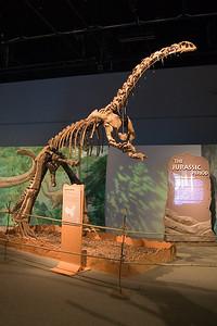 Jingshanosaurus (97040782)
