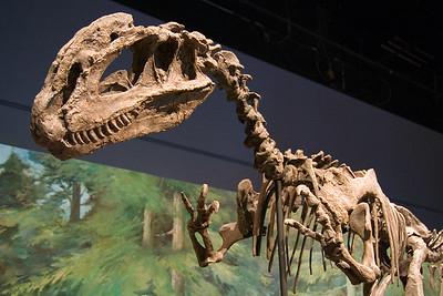 Two Crested Dilophosaurus (97040784)