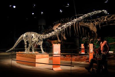 Mamenchisaurus Juvenile  (97040791)