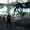 Acrocanthosaurus = high spined lizard
