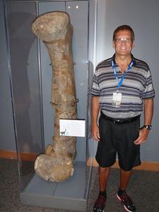 Femus of Camarasaurus Supremus; 156 million years old; the animal weighed around 22 tons.