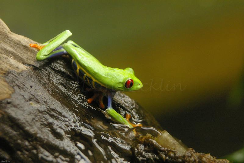 Nocturnal Frog, EcoTarium, Worcester, MA