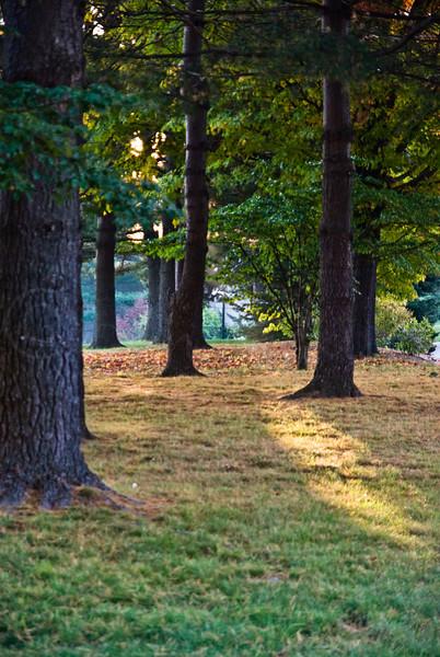 Fall morning light.