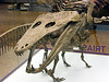 Mastodonsaurus, Triassic giant amphibian
