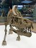 Rauisuchid reptile, Triassic