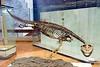 Triassic marine reptile