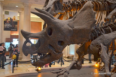 Museum of Natural History - Los Angeles, CA