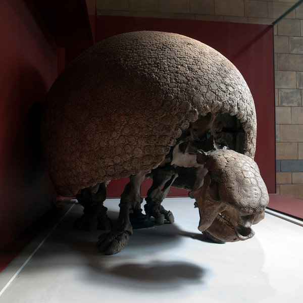 Glyptodon, London, UK<br /> <br /> Olympus E-420 & Zuiko 12-60/2.8-4.0