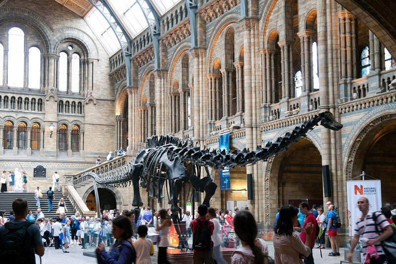 Diplodocus, London, UK<br /> <br /> Olympus E-420 & Zuiko 12-60/2.8-4.0