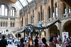Diplodocus, London, UK<br /> <br /> Olympus E-420 & Zuiko 12-60/2.8-4.0
