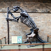 Megatherium, London, UK<br /> <br /> Olympus E-420 & Zuiko 12-60/2